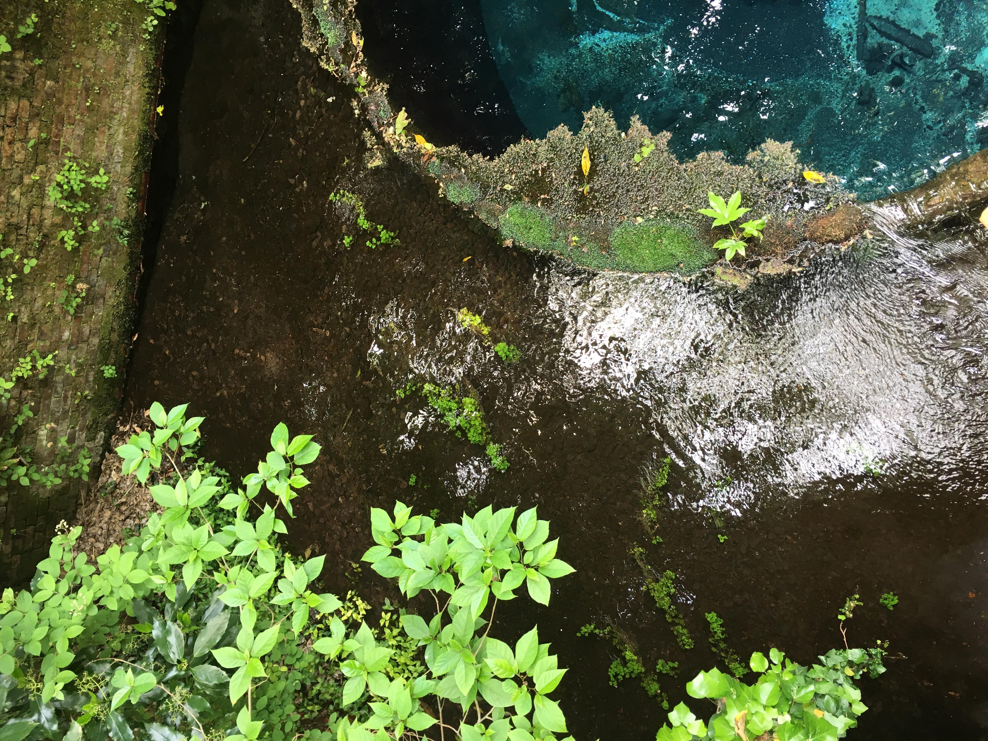 柿田川湧水群の水は、富士山からの湧水で、透明で綺麗な湧水た!
